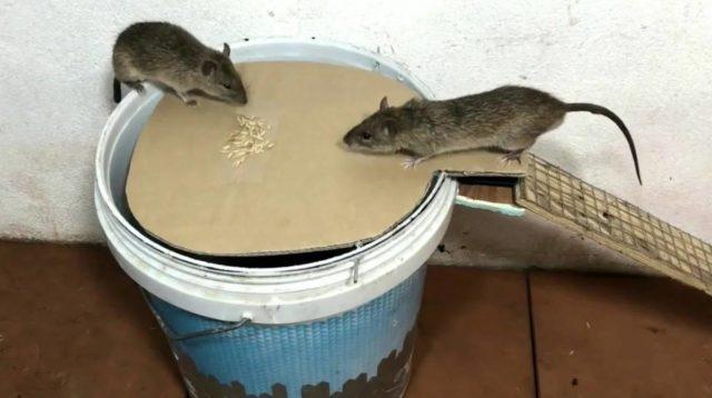 Служба уничтожения крыс в Москве