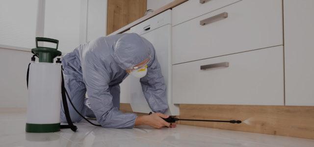 уничтожение тараканов в квартире москва