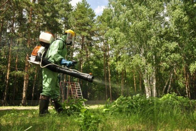 Обработка участка в Московской области